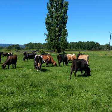 Fonterra still has no plans to sell Chilean business