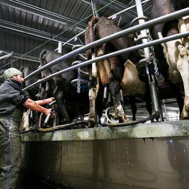 Fonterra hikes forecast milk price on booming Asian demand
