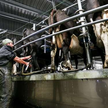 MARKET OPEN:  China demand for dairy still strong
