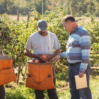 Orchards need pickers – policy isn't delivering them