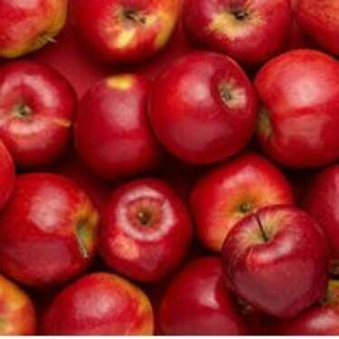 Apple exports slump due to lack of pickers