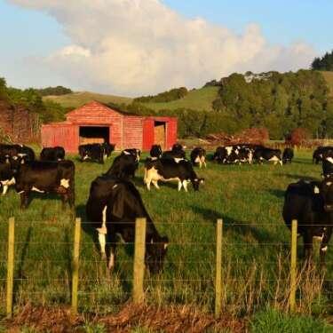 Farm emission cuts do-able, says Climate Commission; backs native planting