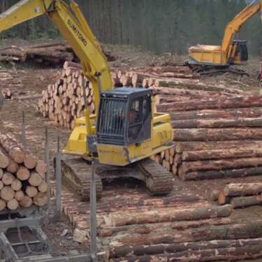 Business cases sought for wood-based fuels, processing