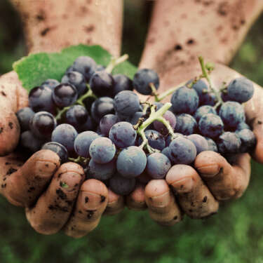 Grape expectations - an expert guide to New Zealand's best wine vintages