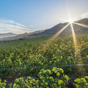 Covid claims boutique vineyard Lamont Wines