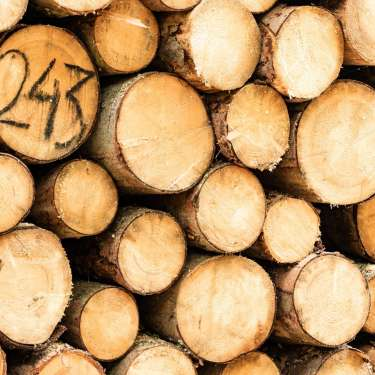 Log prices spurring recovery in regional NZ