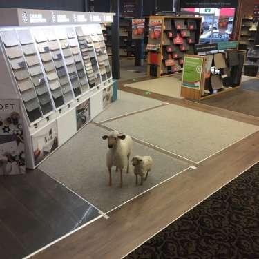 Wools of NZ floors its new wool carpet strategy