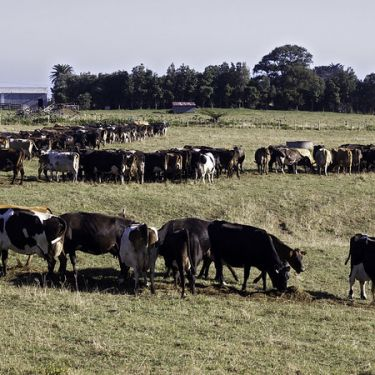 Farmers reliant on five countries for animal feed: MPI