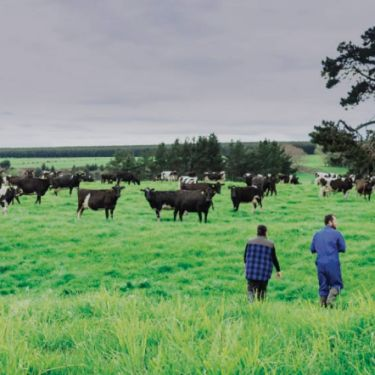 Fonterra farmers to wait till after AGM for council pitch