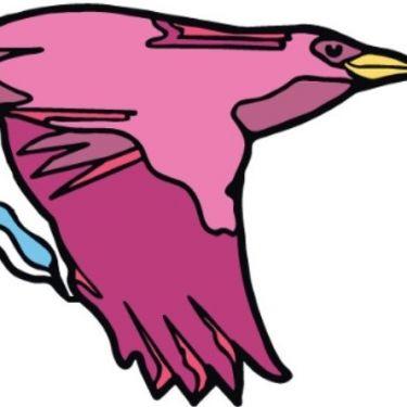 Elevate NZ Venture Fund feeds Blackbird