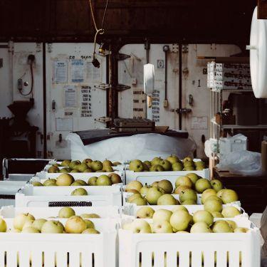 Seasonal work visa for fruit and wine harvests