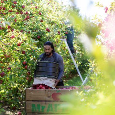 NZ horticulture cruising, but facing headwinds